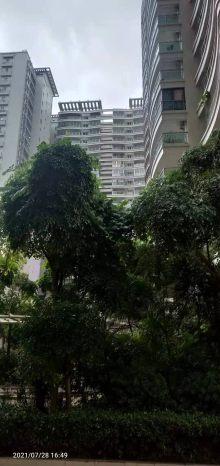 (霞山)金地豪苑 3室2厅1卫145万165m²出售